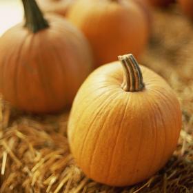 mini pumpkin 280 x 280
